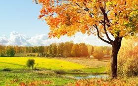 Обои деревья, пейзаж, дом, водоем