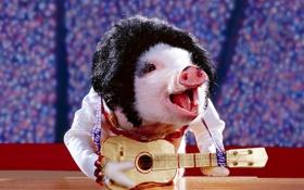 Обои обои, гитара, свин