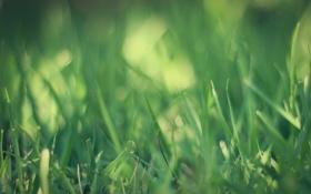 Обои трава, зеленый, grass