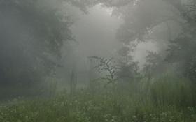 Обои деревья, природа, растения, дымка, леса, туманы, красивые обои для рабочего стола