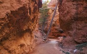 Обои США, дорожка, скалы, Bryce Canyon National Park, ущелье, Юта, деревья