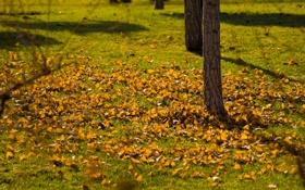 Обои осень, трава, листья, ветви, тени, лужайка, жёлтые