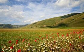 Обои небо, трава, цветы, горы, маки, ромашка, луг