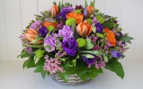 Обои цветы, корзина, тюльпаны, композиция, анемоны, гвоздики