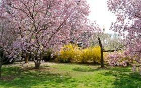 Картинка трава, деревья, цветы, парк, весна, сад, фонарь