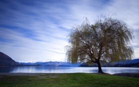 Обои дерево, озеро, пейзаж