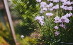 Картинка трава, цветы, сетка, забор, ограда, лепестки