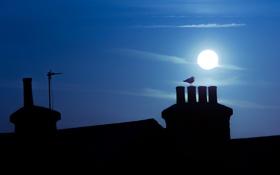 Обои крыша, пейзаж, ночь, птица