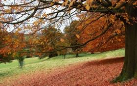 Обои листья, деревья, парк, Осень
