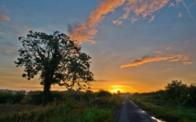 Картинка закат, пейзаж, дорога, дерево