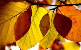 Картинка осень, листья, макро, осенние обои