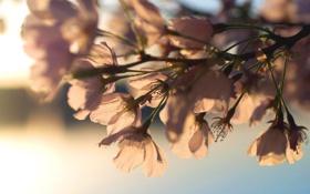 Картинка солнце, свет, цветы, ветки, фон, ветви, обои