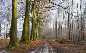 Обои дорога, лес, даль, ряд, брёвна, девевья