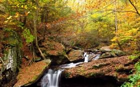 Картинка лес, осень, деревья, водопад, ручей, камни
