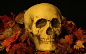 Обои листья, череп, хеловин