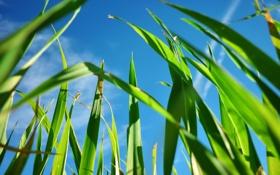 Обои зелень, небо, трава