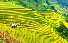 Картинка зелень, горы, поля, склон, домики, плантации