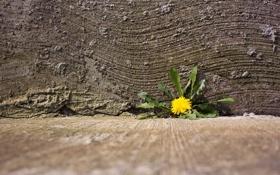 Картинка цветок, город, улица