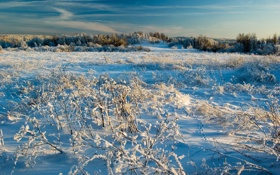 Картинка зима, небо, трава, снег, природа, фото