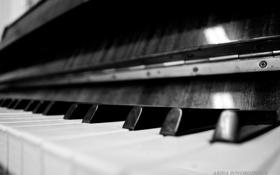 Картинка макро, клавиши, черно-белое, фортепиано, пианино