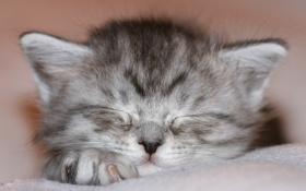 Обои спит, носик, лапка