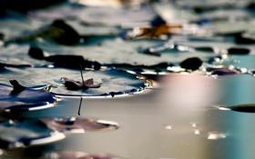 Обои вода, макро, природа, река, фото, фон, обои