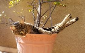 Картинка кот, вазон, отдых, кошка