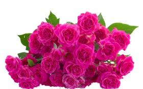 Обои цветы, flowers, листики, leaves, розовые розы, pink roses