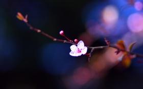 Обои цветы, веточка, весна