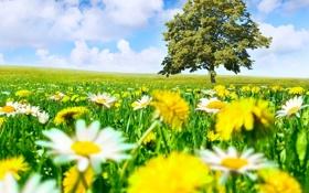 Обои landscape, облака, пейзаж, meadow, луг, дерево, tree