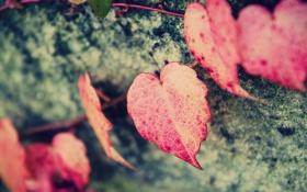 Картинка листья, макро, фон, розовый, обои, форма, сердечко