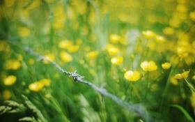 Обои лето, трава, макро, цветы, проволока, желтые