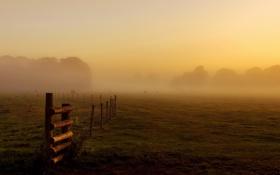 Картинка поле, пейзаж, туман, забор, утро, скот