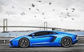 Обои Мост, Lamborghini, Blue, Суперкар, LP700-4, Aventador, Supercar