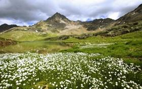 Картинка поле, цветы, горы, водоём
