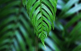 Обои зелень, лист, макро