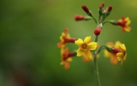 Обои цветок, растение, стебель, соцветие
