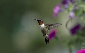 Обои цветы, птица, фокус, размытость, колибри