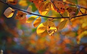 Обои листья, осень, ветка, боке