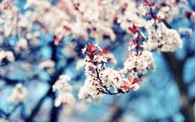 Картинка листья, ветки, природа, вишня, фото, дерево, обои