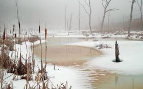 Обои снег, озеро, камыш