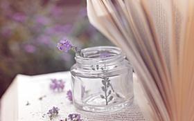 Обои цветы, строки, страницы, баночка