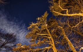 Обои зима, небо, звезды, свет, деревья, ночь, ветки