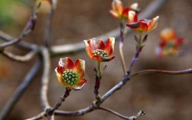 Обои цветы, природа, дерево, ветка, лепестки