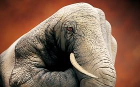 Обои креатив, обои, слон, рука, художник, wallpaper, пальцы