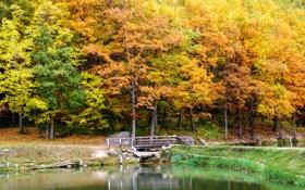 Обои осень, деревья, пейзаж, мост, природа, озеро, Landscape