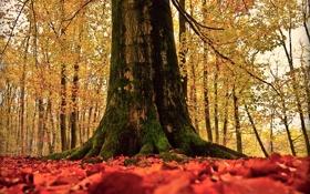 Картинка осень, природа, дерево, листва, ствол