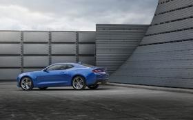 Обои Chevrolet, шевроле, камаро, 2015, Camaro