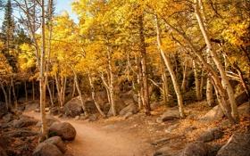 Обои осень, лес, деревья, камни, тропа