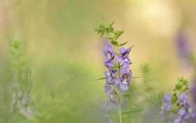 Картинка поле, цветы, размытость, сиреневые
